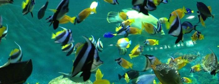 COEX Aquarium is one of Korea.