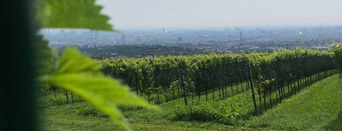 Weingut Cobenzl is one of Viennese Wine.