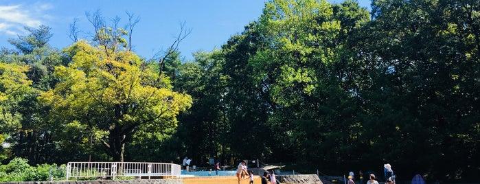国営武蔵丘陵森林公園水遊び場 is one of Lugares favoritos de Masahiro.