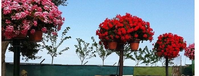 Valentín Garden Center is one of Yunusさんのお気に入りスポット.