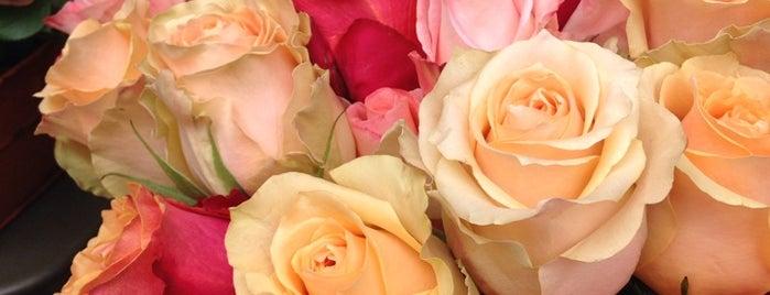 Au nom de la rose is one of Home.