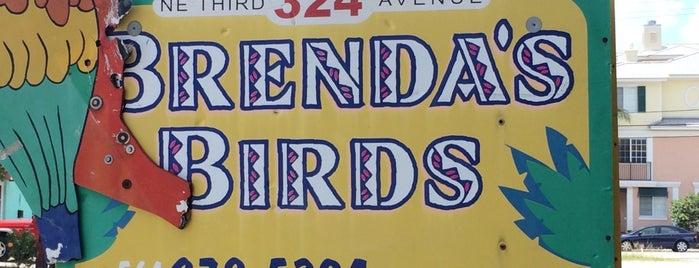 Brenda's Birds is one of Delray.