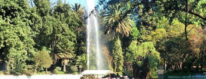 Parque México is one of CDMX.