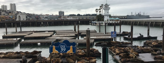 Sea Lions at Pier 39 is one of San Francisco.