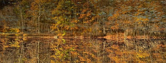 Rockefeller State Park Preserve is one of Lieux qui ont plu à Brandon.