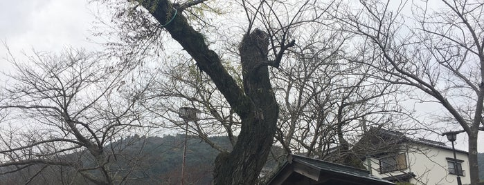 巌流ゆかりの柳 is one of 広島 呉 岩国 北九州 福岡.