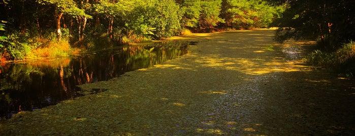 Reserva de la Biósfera de los Pantanos de Centla is one of Posti che sono piaciuti a Shirley.