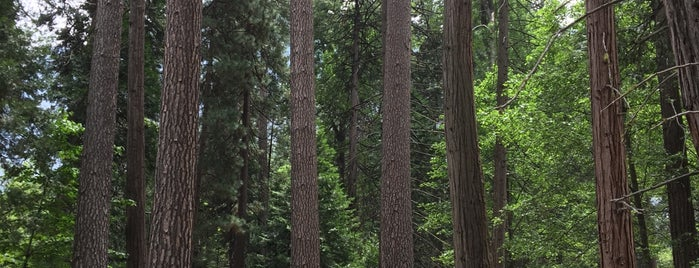 Merced Grove of Giant Sequoias is one of California.