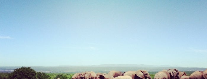 Addo Elephant National Park is one of Metinさんのお気に入りスポット.