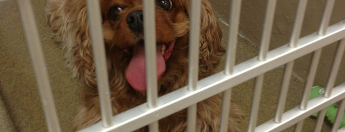 Arizona Humane Society is one of B : понравившиеся места.