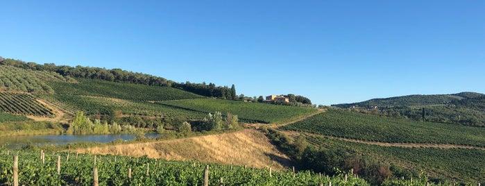 Tenuta di Nozzole is one of Chianti Classico Producers.