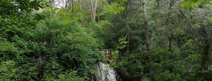Akşehir Kent Ormanı is one of Sina 님이 좋아한 장소.