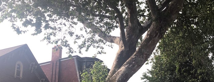 Oldest Tree in Buffalo is one of The Best of Buffalo, NY.