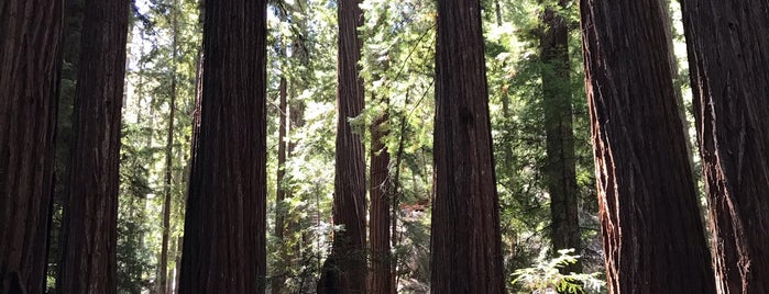 Montgomery Woods State Natural Reserve is one of Mendocino.