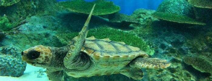 Niigata City Aquarium Marinepia Nihonkai is one of Gespeicherte Orte von Yuka.