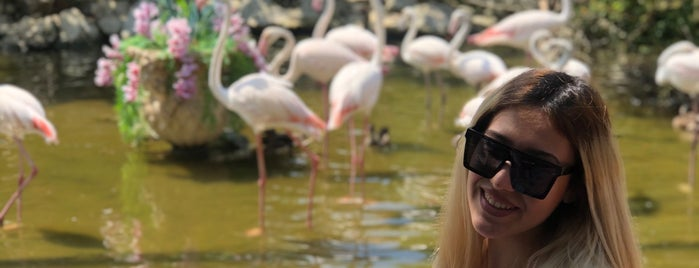 Flamingo Köy is one of Gespeicherte Orte von Sena.