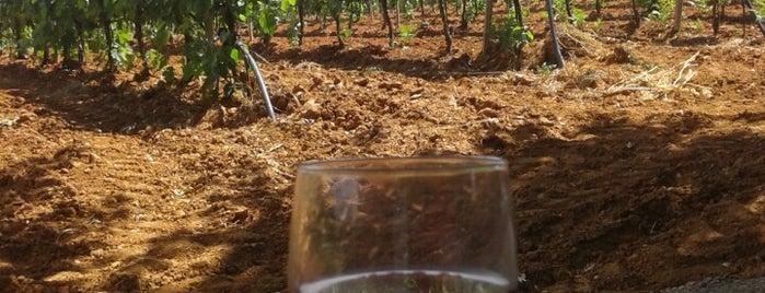 Κτήμα Τσέλεπου is one of Wineries.