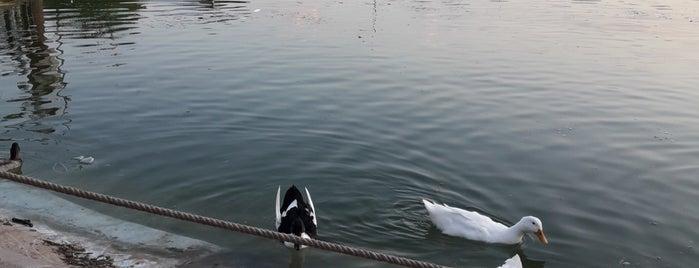 Gölet Çocuk Oyun Parkı is one of Sabri'nin Beğendiği Mekanlar.