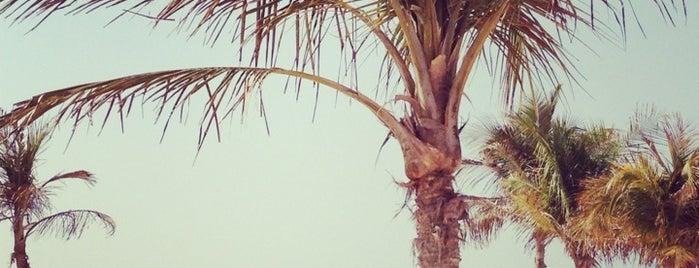 Jumeirah Open Beach is one of Locais curtidos por Els.