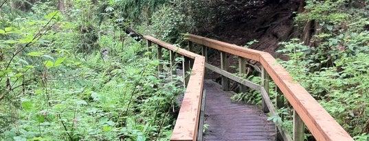 Schmitz Preserve Park is one of Seattle's 400+ Parks [Part 1].