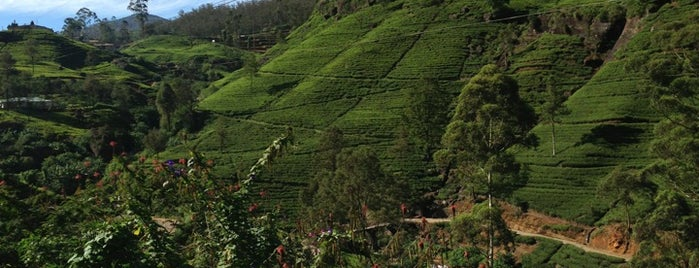 Nuwara Eliya | නුවර එළිය | நுவரேலி is one of Great World Outdoors and Spots.