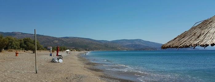 Gonia Beach is one of Chios - Sakız Adası.