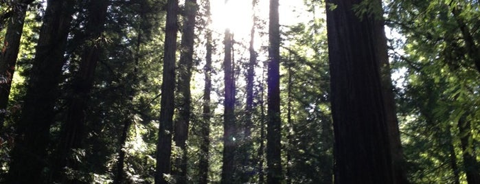 Armstrong Redwoods State Natural Reserve is one of Outdoor Adventures.