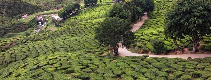 Bharat Tea Plantation is one of Signe 님이 좋아한 장소.