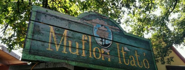 Muflon Itató is one of Budai hegység/Pilis.