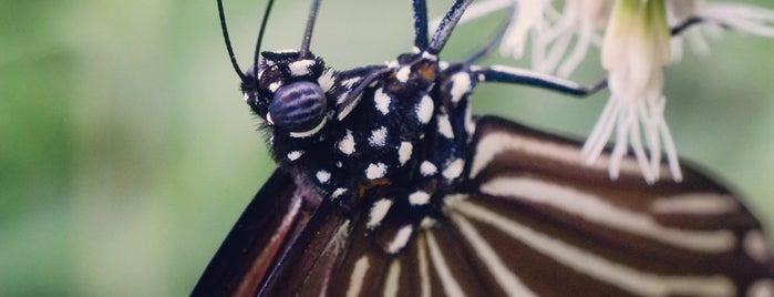 Butterfly Garden @ Hort Park is one of Singapura.