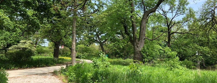 Wooded Island is one of Chicago Part II.