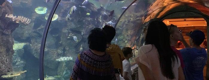Shark Reef Aquarium is one of Orte, die Phillip gefallen.