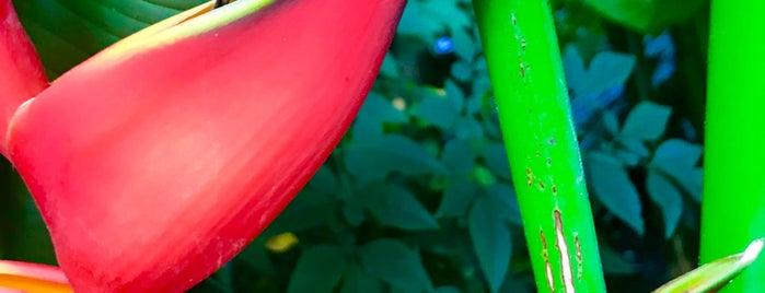 The New York Botanical Garden is one of Natalie 님이 좋아한 장소.