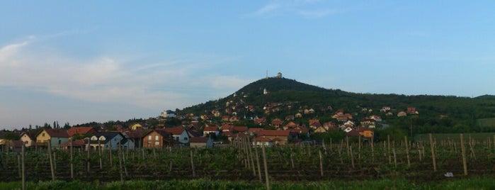 Vršački Breg is one of visit again.