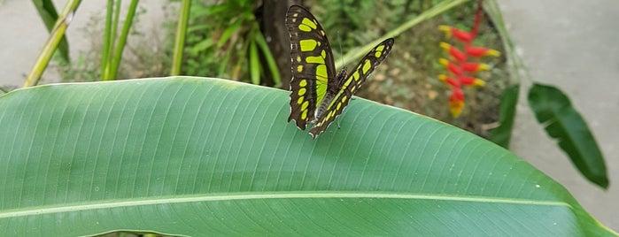 Zoo de Martinique | Jardin botanique du Carbet is one of Martinique & Guadeloupe.