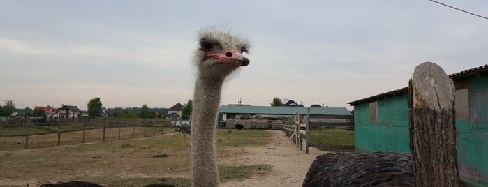 """Страусина Ферма """"Чубинский страус"""" is one of Никаさんのお気に入りスポット."""