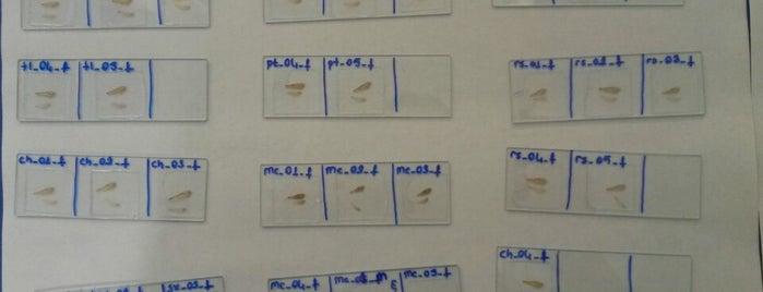 Morfometri Laboratuvarı is one of Yunus'un Beğendiği Mekanlar.