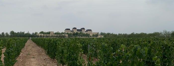Château Mihope is one of M : понравившиеся места.