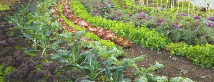 Brooklyn Botanic Garden is one of Saturday adventures.