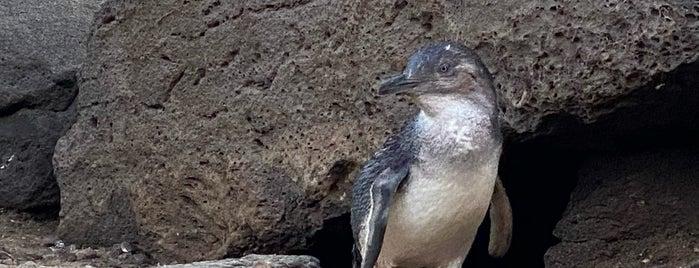 St Kilda Penguins is one of Orte, die Oonagh gefallen.