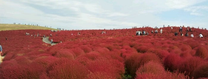 Hitachi Seaside Park is one of if you're ever in ____.