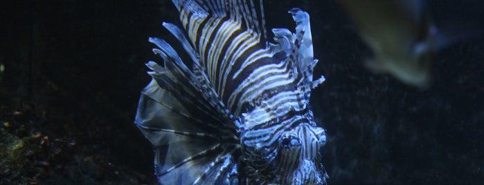 Blue Reef Aquarium is one of Hastings.