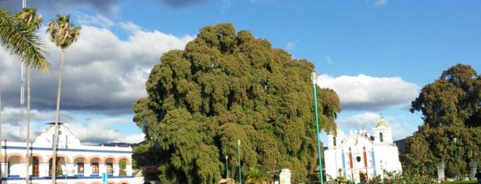 Árbol del Tule is one of CDMX e Oaxaca.