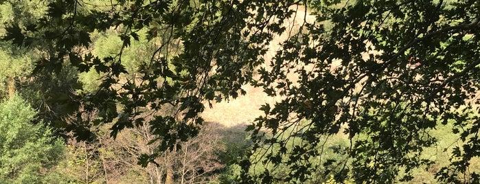 Arı Park Organik Yörük Sofrası is one of สถานที่ที่ Duygu ถูกใจ.