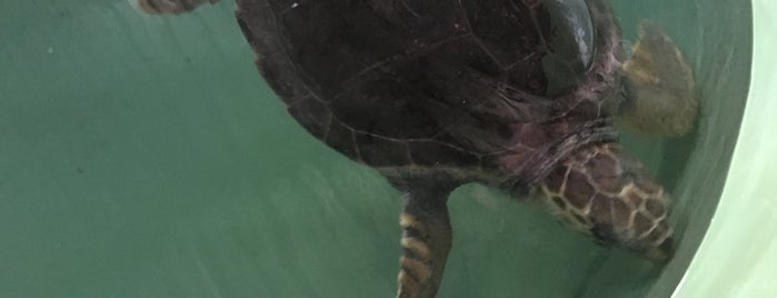 İztuzu Plajı Caretta Caretta Rehabilitasyon Merkezi is one of Locais curtidos por Cagla.