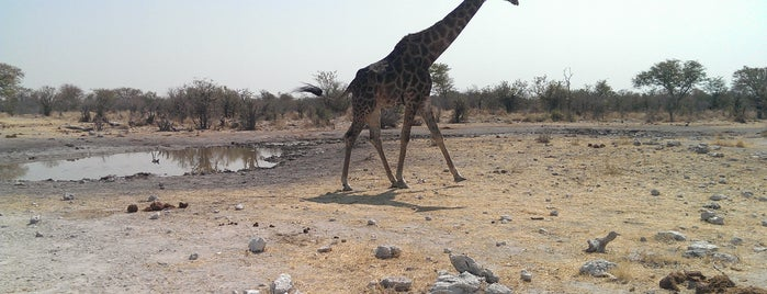 Etosha National Park is one of Manoloさんのお気に入りスポット.