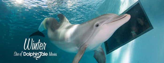 Clearwater Marine Aquarium is one of Tampa.