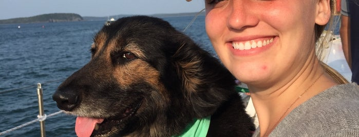Windjammer Cruises is one of Pet Friendly Destinations.