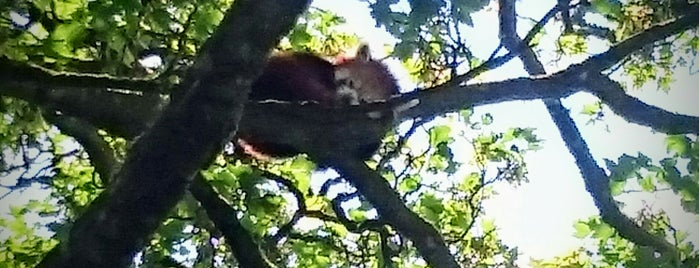 Red Panda Platform is one of Manor Wildlife Park.