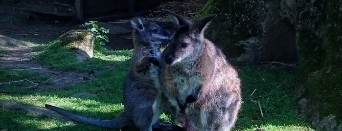 Wallaby Walkthrough is one of Manor Wildlife Park.